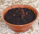 The rosso lettuce were the first seeds to germinate