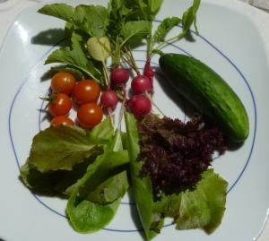 I grew my own salad