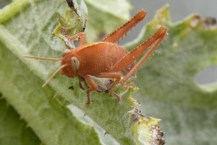 Cute little brown bug