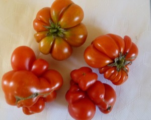 Strange tomatoes