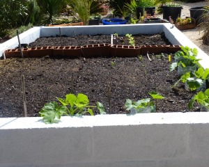 Vegetable garden 14/03/11