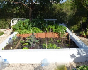 Vegetable garden 14th April