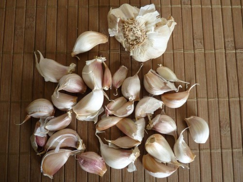 November (2010), I divided up heads of garlic and planted the cloves in several large pots.