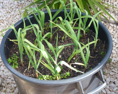 February 2011: They are sprouting well and I am really optimistic!