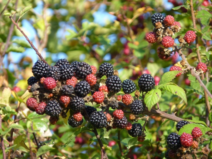 Autumn's Hedgerow Harvest