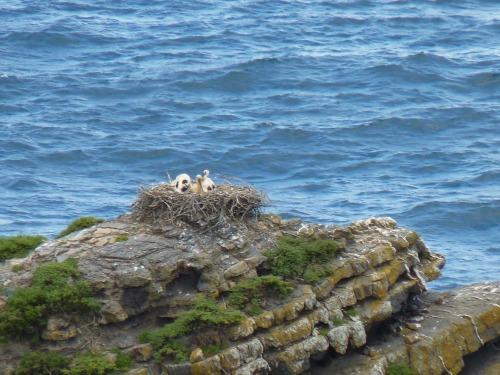 Baby Storks, May 2011