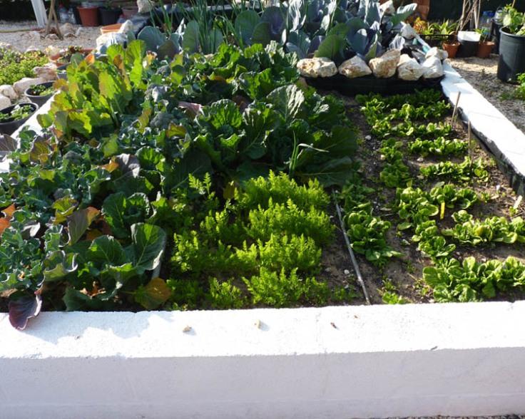 Vegetable garden March 2012