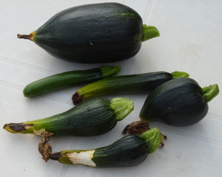 My  zucchini would certainly not win any prizes!