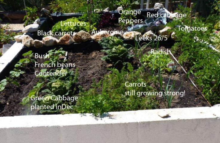Raised vegetable garden 23rd June 2012