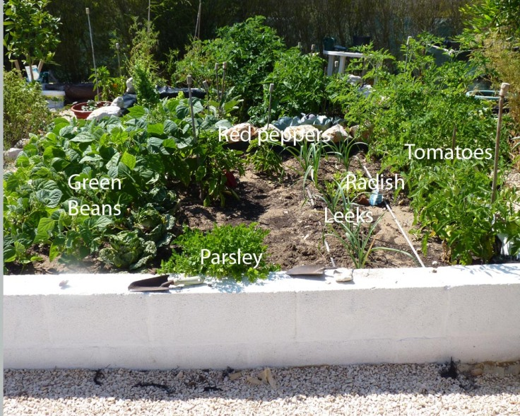 Raised vegetable garden 18th July 2012