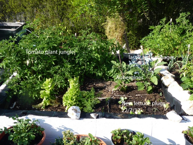 Raised vegetable garden 22nd July 2012
