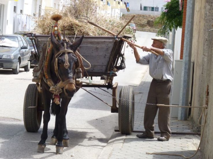 Everyday life in the Algarve, but not as we know it!