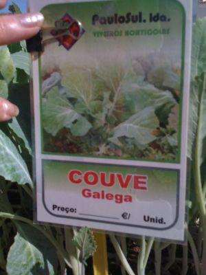 Couve Galega