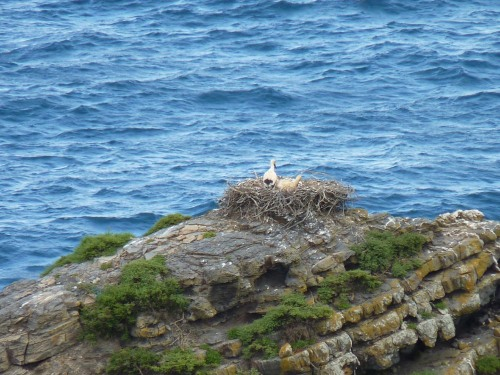 White storks nesting on an outcrop of rocks
