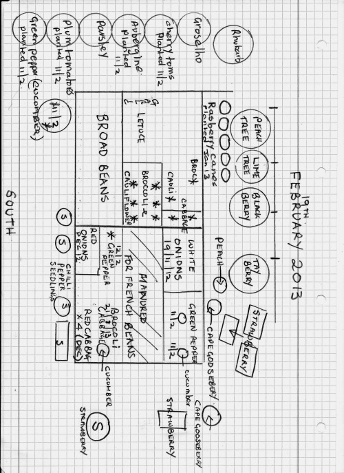 Plan of my Vegetable area 19/02/13