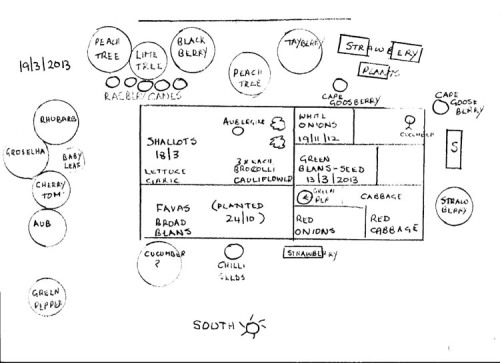Plan of my Vegetable area