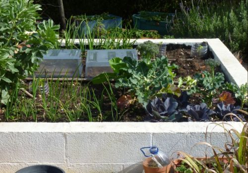 Piglet's Vegetable Area 19/03/13
