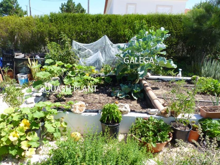 Raised Vegetable Plot - July13