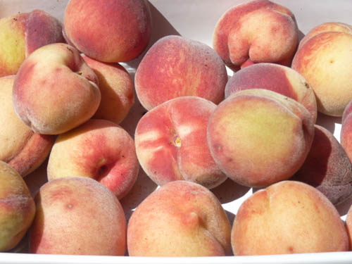 Piglet's Homegrown Peaches