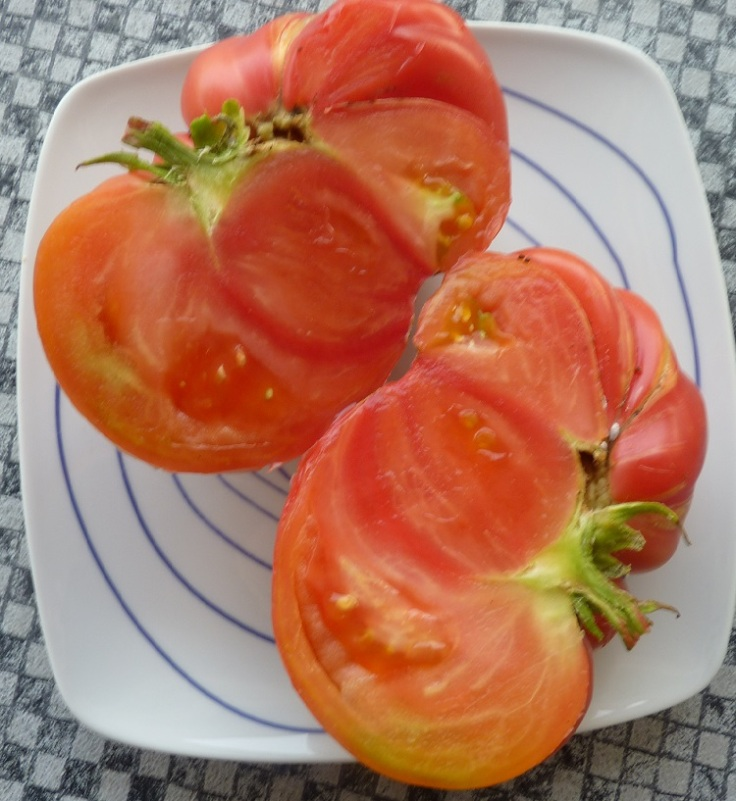 The tomato weighed 1lb 8 oz!