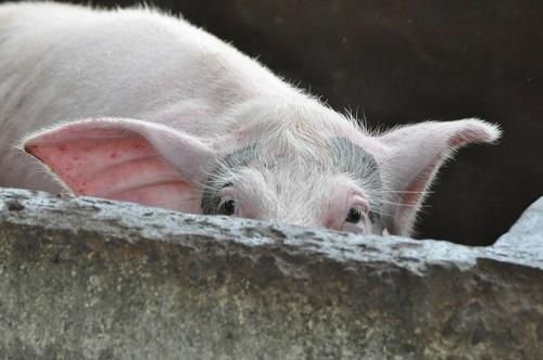 Piglet's Pet Peeves