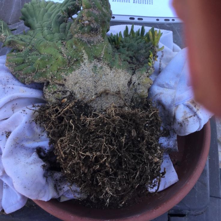 Fungus at base of plant