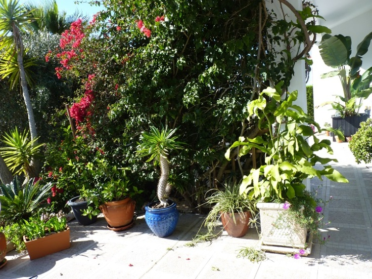 Front Patio 12th November