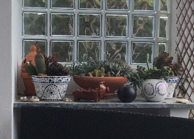 mosaic pot succulent display