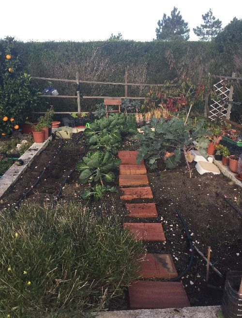 Raised vegetable area - 29th November