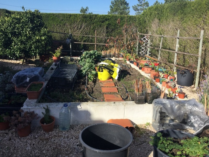 Raised vegetable area - December