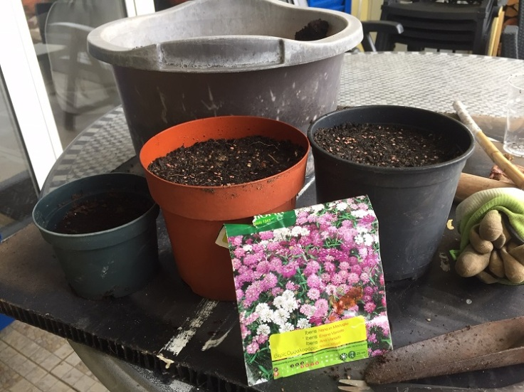 Planting up seeds