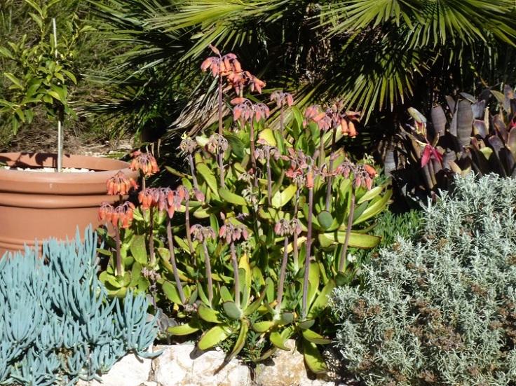 Orange succulent in January