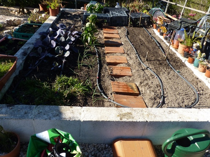 Raised Vegetable Garden - 8th- Jan 2019