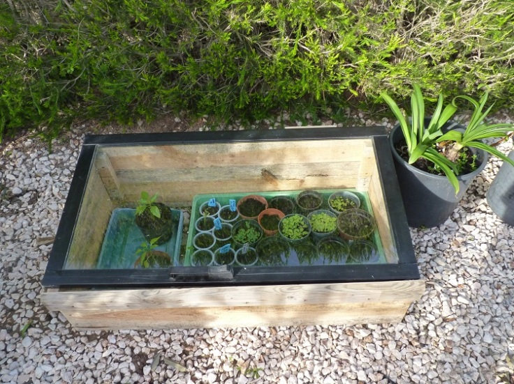 My new cold frame