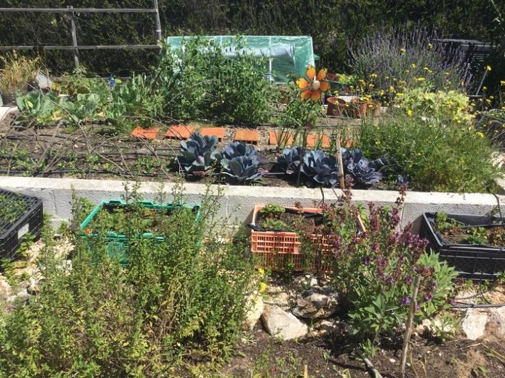 Raised vegetable garden - April 2019