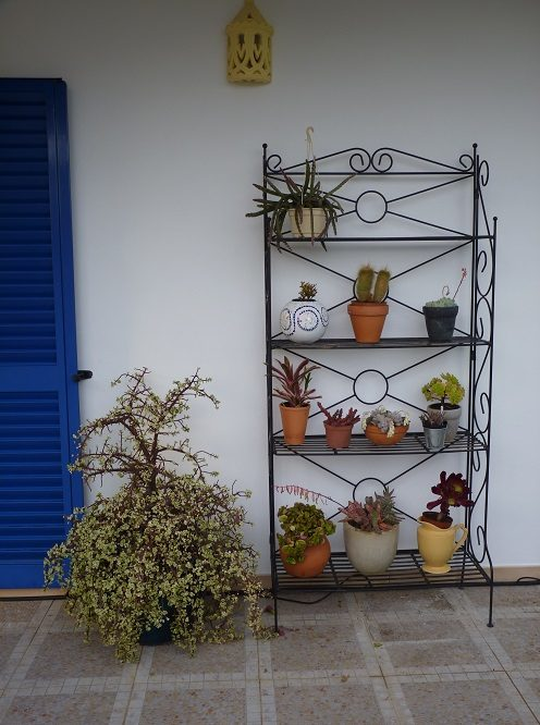 Plant display stand
