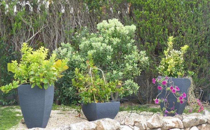 Petunias still flowering from May last year