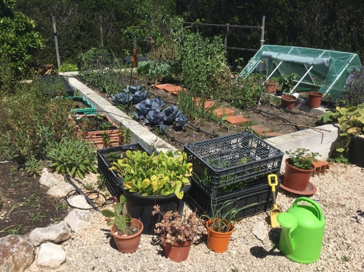 Raised Vegetable Garden May 2019