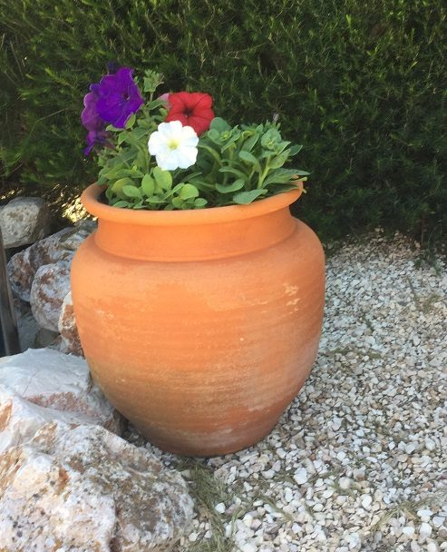 Petunias in Pot