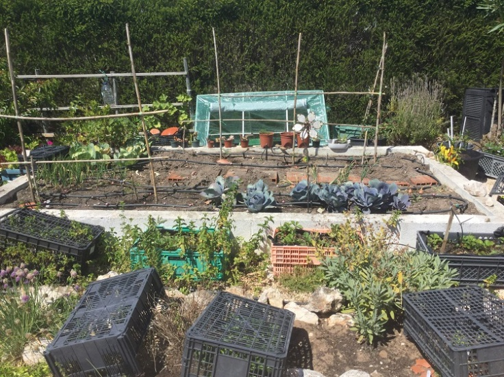 Raised veg area