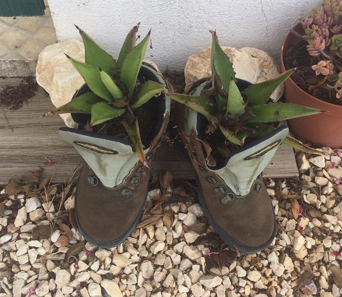 Old trainers upcycled to plant containers
