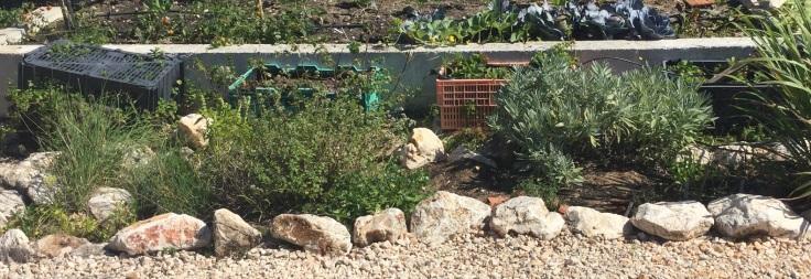 Herb garden August 2019