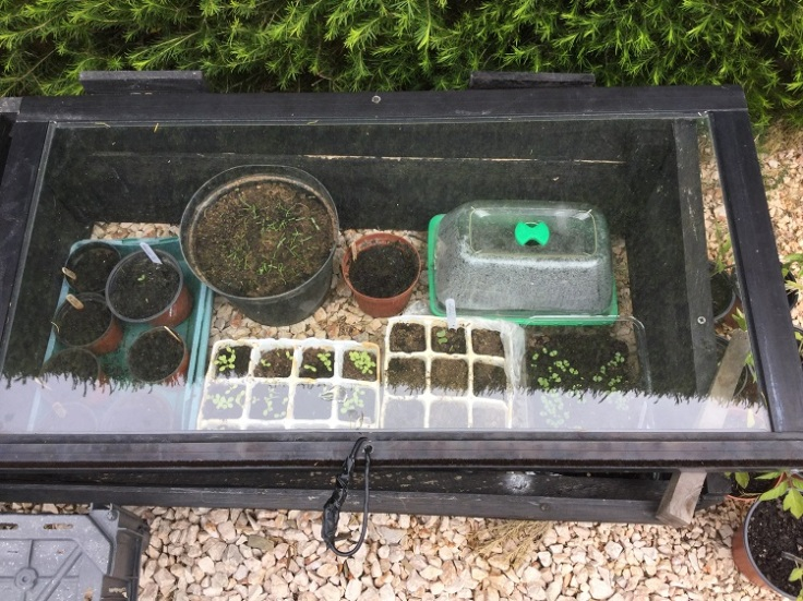 Seed cold frame
