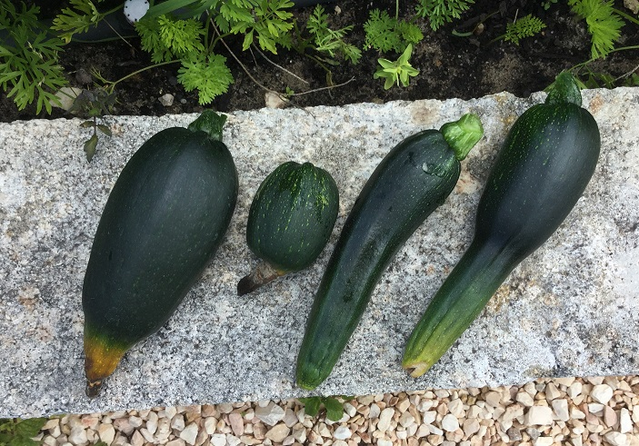 deformed courgettes