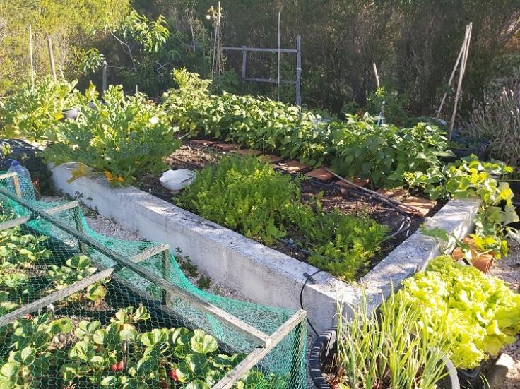 Raised vegetable area in progress