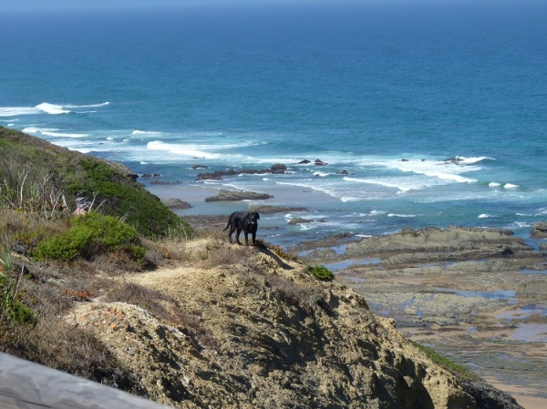 Dog enjoys the views down to Praia da Carriagem