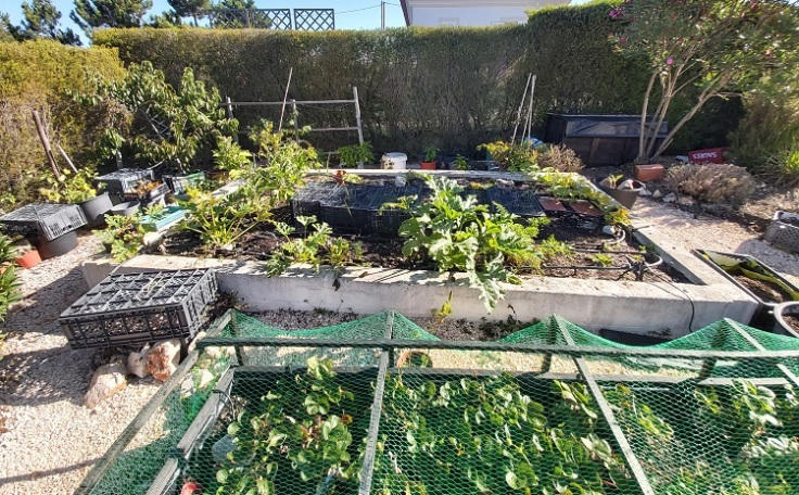 Raised Vegetable garden - August 2020