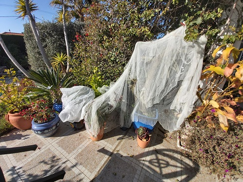 Trying to protect plants from frosty nights