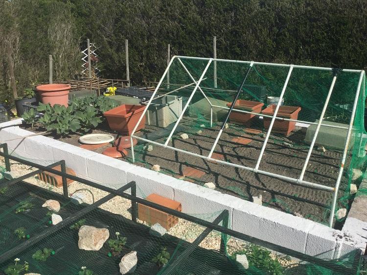 Cat barricade on raised vegetable garden
